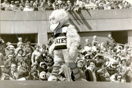 Strutting his stuff atop the dugout at the season opener at Three Rivers Stadium was the new Pirate Parrot, 1979 (Edwin Morgan/Pittsburgh Press)