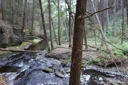 The recreation area also includes wooded tributaries to the Delaware, like Raymondskill Creek.