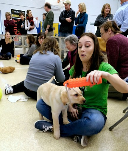 MaKailyn Cowell plays with a Labrador Retriever puppy during a Special Auxiliary Play Date for invited guests at the Ability Center in Sylvania. THE BLADE/LORI KING