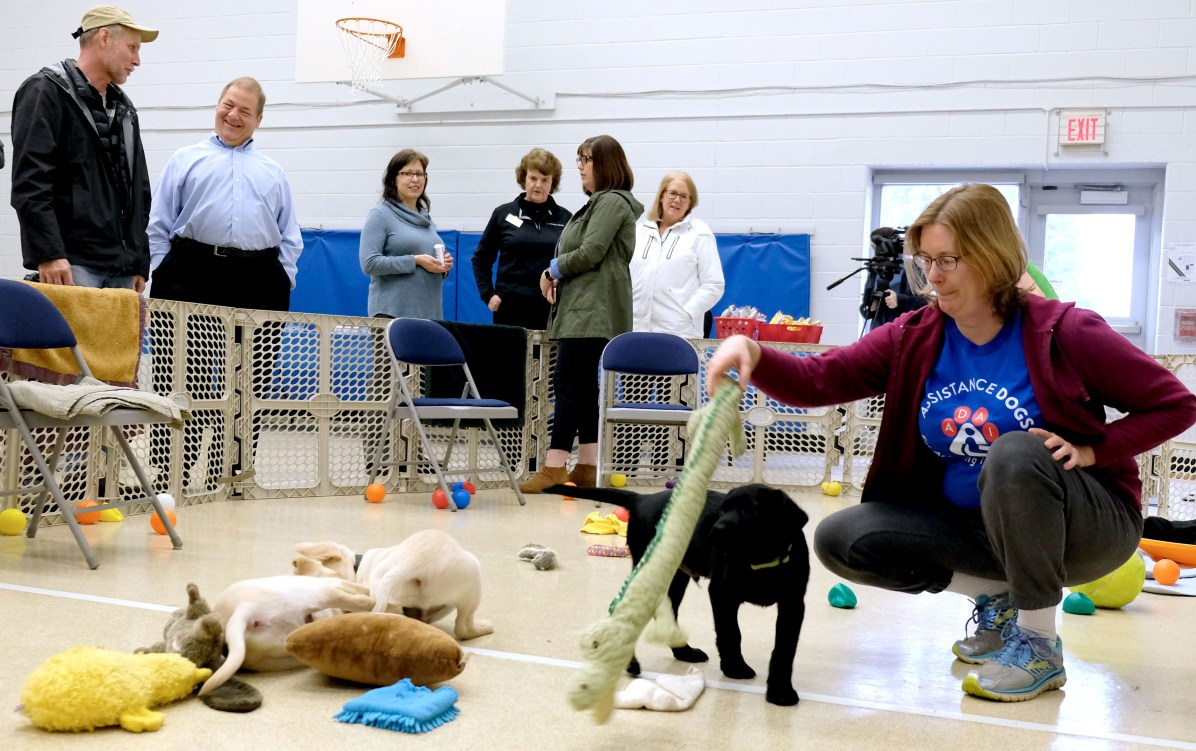 Robin Wegman, with the ADAI puppy smart start program, plays with a Labrador Retriever puppy during a Special Auxiliary Play Date for invited guests at the Ability Center in Sylvania. THE BLADE/LORI KING