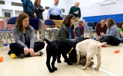 Cristie McKenzie, Heather Warga, Susan Dignam, Marie Stokowski and Diane Dunn play with Labrador Retrievers during a Special Auxiliary Play Date for invited guests at the Ability Center in Sylvania. THE BLADE/LORI KING