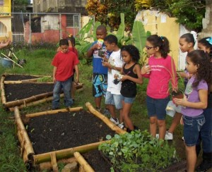 "The Saving vacant lots, participatory installation of ecological community gardens"" is one of the seven selected projects to receive Ford environmental grants."