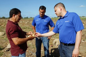 Farmer Eddie Noel Torres of Santa Isabel (left), shows two Walmart executives some onions harvested at his farm.