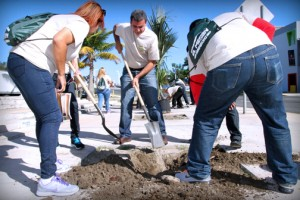 A group of employees planted more than 11 Zabar palm trees.