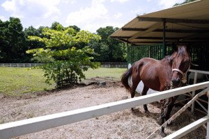 Developed through a public-private initiative and an estimated investment of $500,000, the facilities at Hacienda Siesta Alegre will have 24 stables, a room for performing necropsies and infirmary facilities.