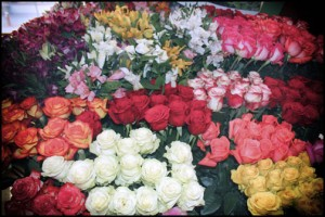 Colombia produces some of the world's most beautiful and long-lasting roses, Procolombia officials said.