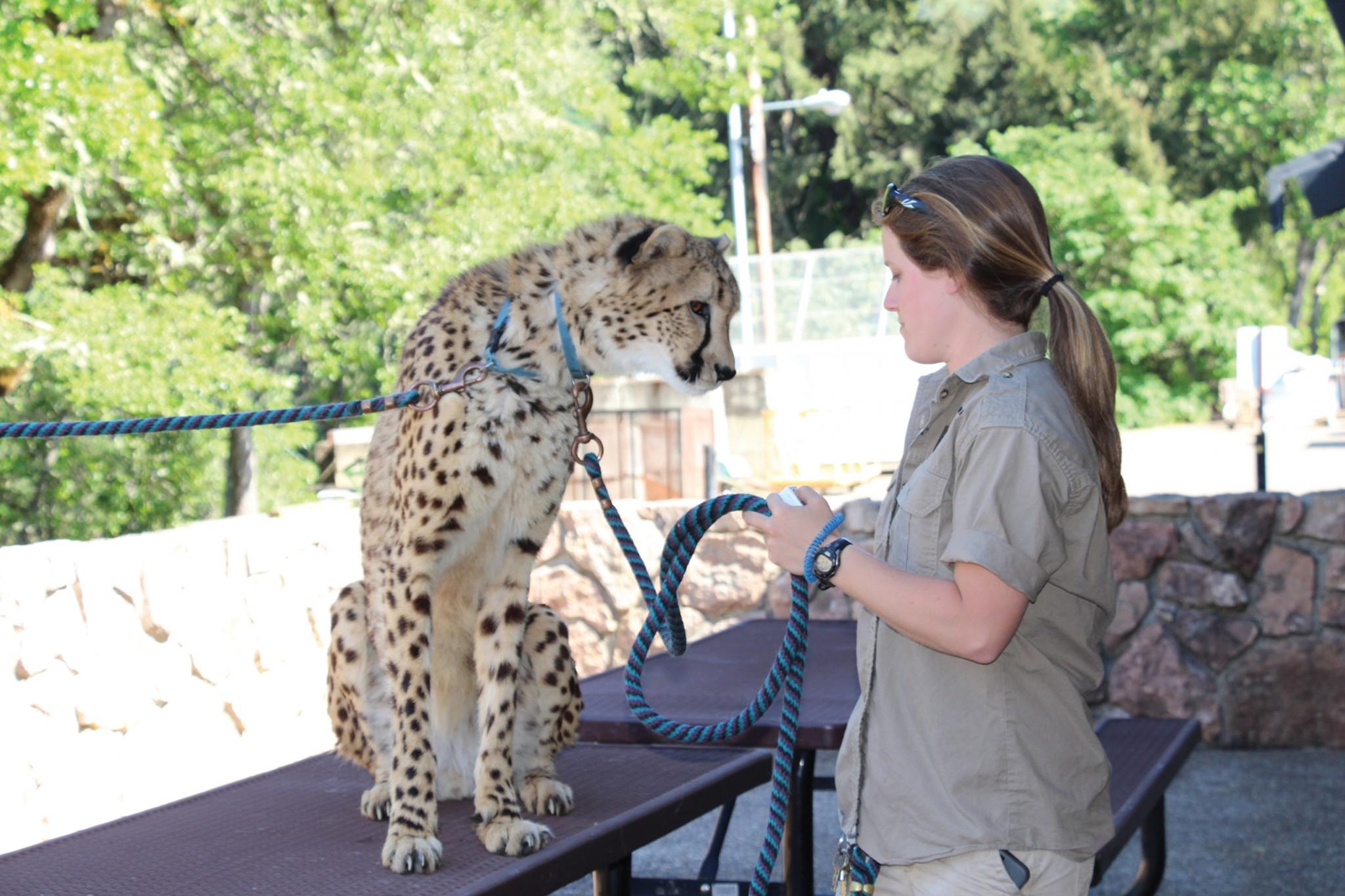 wildlife safari picture #2