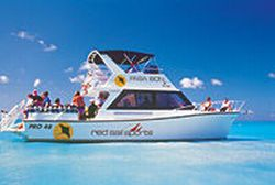 Aruba-Scuba-Diving-Tour-with-Red-Sail-Sports-One-or-Two-Tank-Scuba-Dive