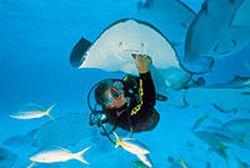 Grand-Cayman-Scuba-Diving-Tour-Stingray-City-Dive
