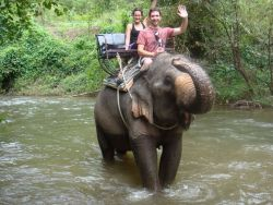Khao-Yai-National-Park-and-Elephant-Ride-Day-Tour-from-Bangkok-Thailand