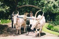 b-act-bullockcart