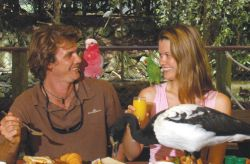 breakfast-with-the-birds-australia-rainforest-tour