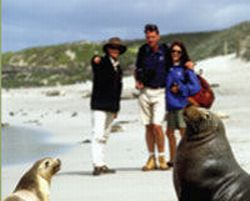 kangaroo-island-2-day-wilderness-safari-adventure-tour-from-adelaide-in-adelaide