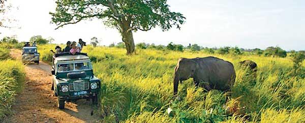 srilanka_wildlife