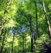vienna-woods-and-mayerling-half-day-tour-in-vienna-austria