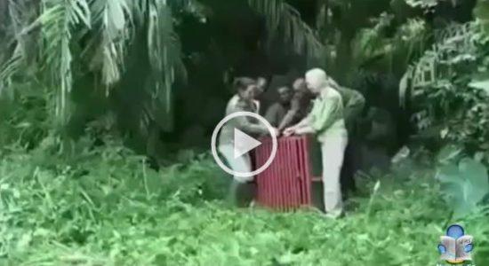 newslandia scimpanzè libero reazione video preview