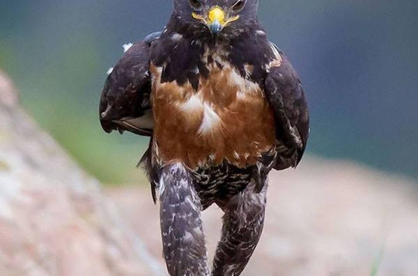 Uccello Fotogenico Virale Fotomontaggi