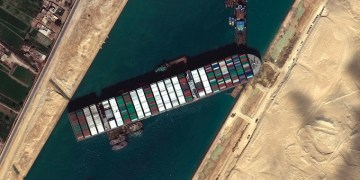 Thousands of animals aboard cargo ships