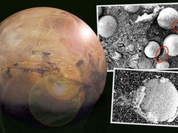 'There is life on Mars' Bizarre study claims alien mushrooms are growing on the Red Planet