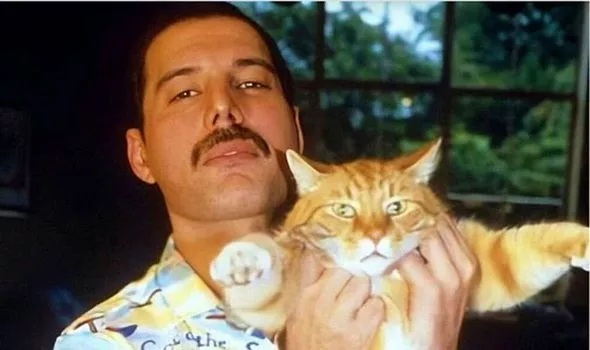 Freddie Mercury incredible tribute to his cats