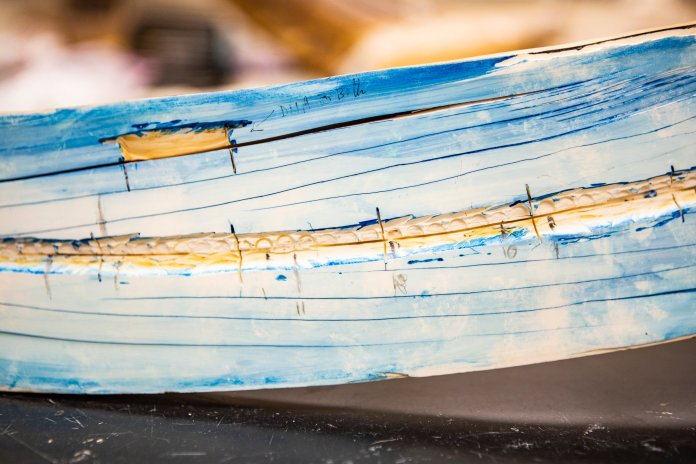 Split mammoth tusk, stained blue to see the growth layers. (JR Ancheta/University of Alaska Fairbanks)
