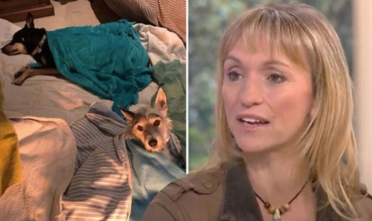 BBC's Michaela Strachan overwhelmed with dogs-related support Crystal Meth poisoned them