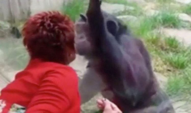 After four years of 'affairs' with chimps, woman banned from the zoo