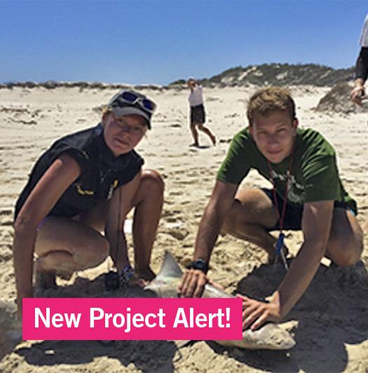 New Project Alert!