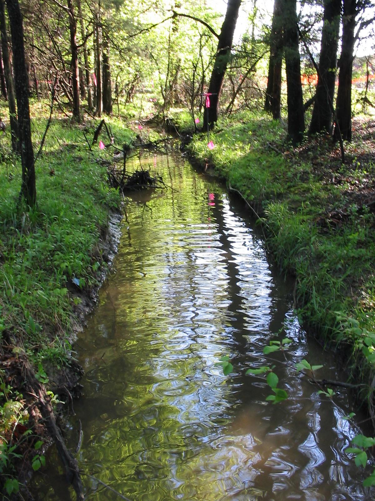 Wetlandstu S