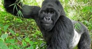 tourist in Uganda travel