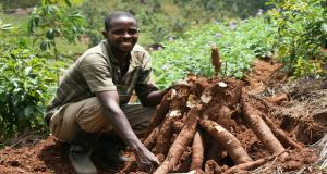 CASSAVA-FARMING in nigeria