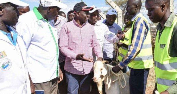 baringo goats auction