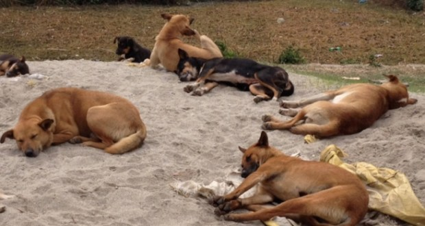 world animal dogs culling