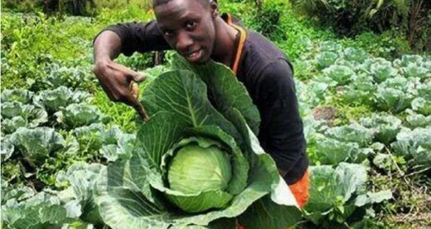 Eating Cabbages Could Help Fight Coronavirus – New Study Tells