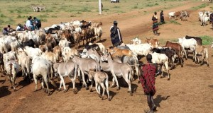 Security Drones To Fight Cattle Rustling In Karamoja ~ Museveni