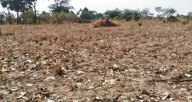 Drought In Kenya To Worsen As Predictions Show Reduced Rain