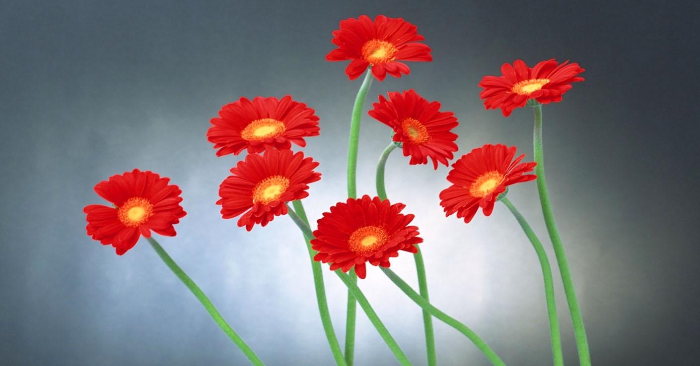 podarki-na-8-marta-dlya-zhenshhin-raznyx-znakov-zodiaka