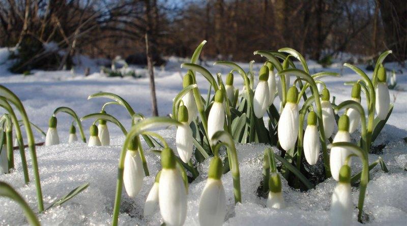 Какие праздники будут в марте 2018 года в России: календарь рабочих и выходных