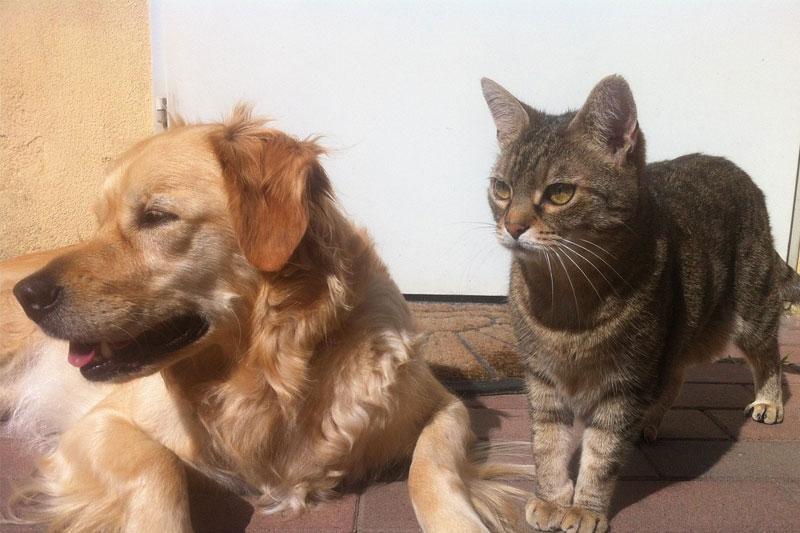 Закон об обязательной маркировке домашних животных внесут до конца года