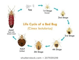 Home made remedies for Bugs
