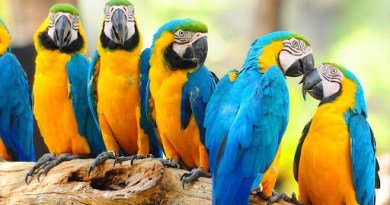 federal govt ban the import of birds and animals