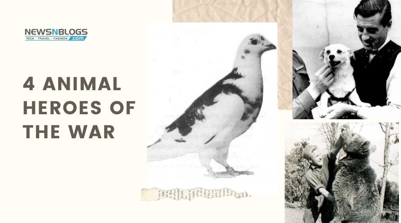 4 Animal Heroes of the War