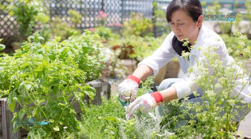 Pick These Herbs from Your Garden for Healing in 2021