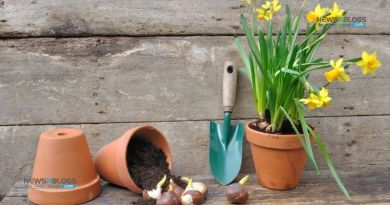 Ultimate Beginner's Guide for Gardening: How and When to Plant bulbs