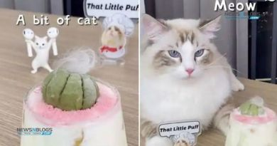 Cat preparing delicious drinks takes internet by storm; watch the adorable video
