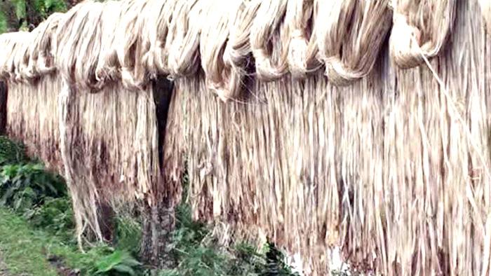 পাটের ন্যায্যমূল্য নিশ্চিতে সরকার সচেষ্ট