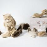 """【RANDA&Mash】かわいすぎる!インスタで大人気のネコ""""マッシュ""""が靴に"""