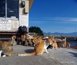 「猫島」愛媛・青島