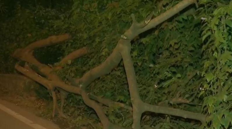 मेट्रो प्रोजेक्ट के लिए मुंबई के आरे में पेड़ काटने का मामला गर्मा गया है। पेड़ काटने के विरोध में लोगों ने सरकार के खिलाफ प्रदर्शन किया।