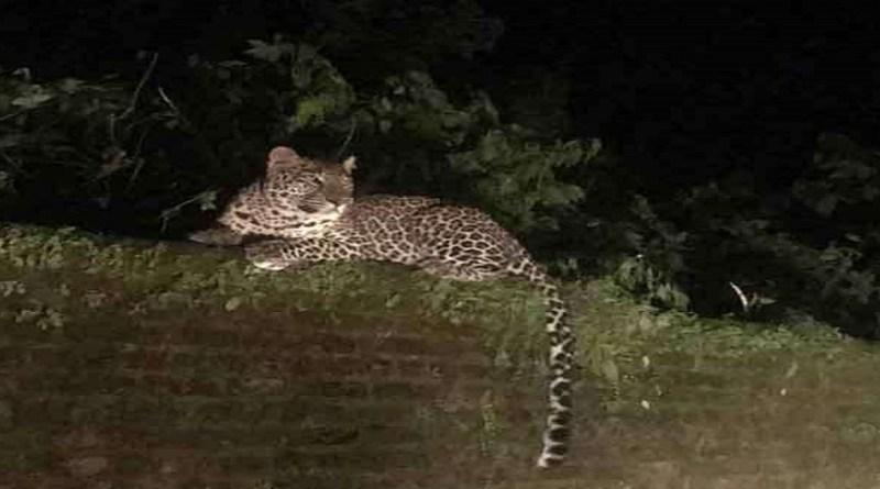 उत्तराखंड के कई इलाकों में जंगली जानवरों का अक्सर आतंक देखने को मिलता रहता है। आए दिन गुलदार लोगों पर हमले करते रहते हैं।